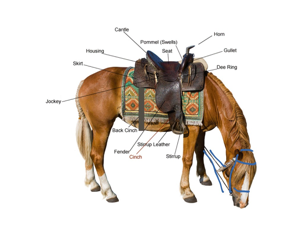 ShowMe - Western show saddles