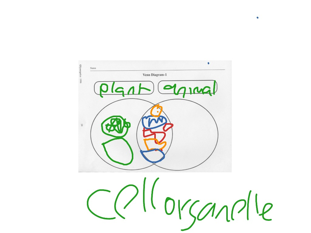 Venn diagram cytokinesis plant animal cells - Plant Animal Cell Organelles